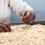 Corporate take over of African seeds