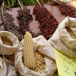 western-seed-fair
