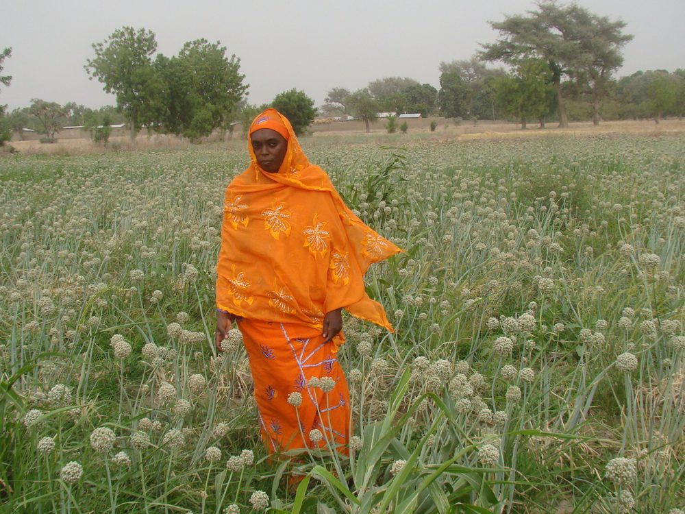 mrs-habiba-in-the-onion-seed-farm