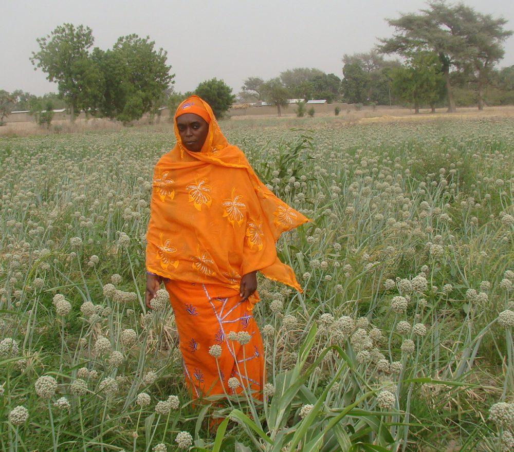 mrs-habiba-in-the-onion-seed-farm