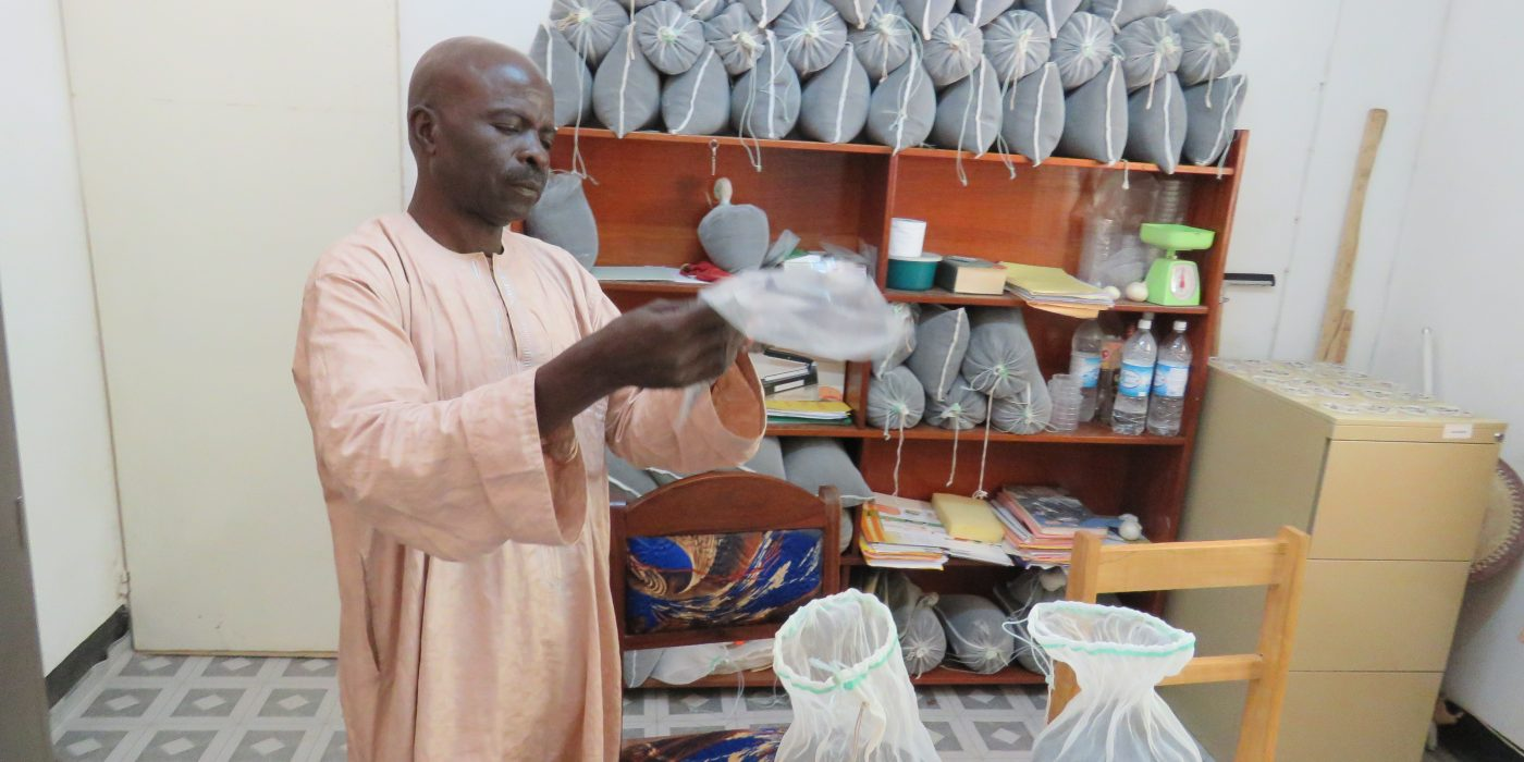 seed-inspector-collecting-samples-to-assess-seed-germination-rate